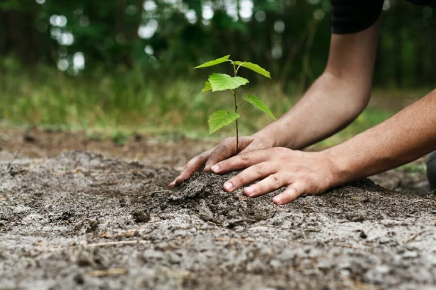Больше 2 миллионов деревьев посадили на Северном Кипре