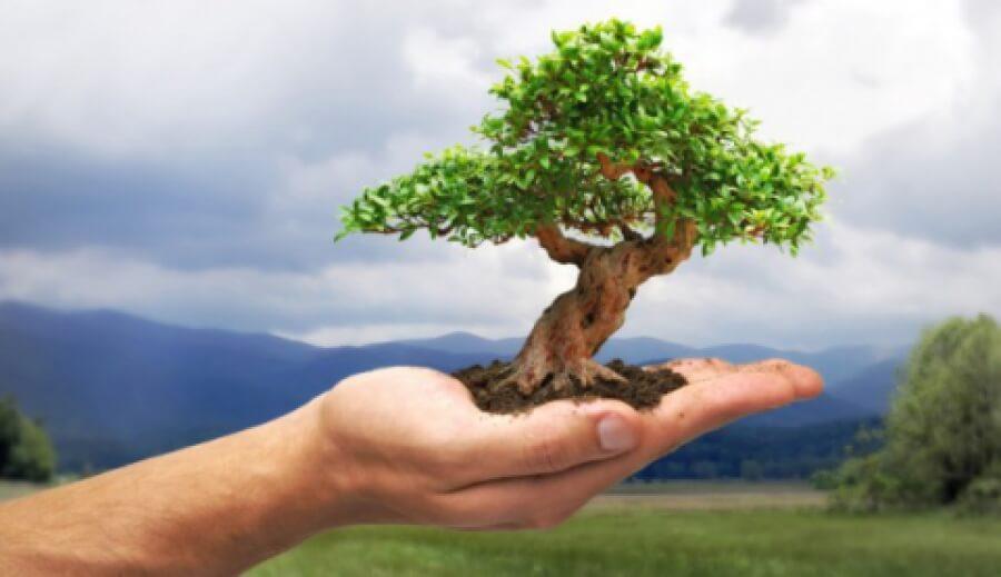 150 деревьев и новая зона отдыха для Кирении